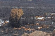 http://www.abc.net.au/news/2016-01-30/area-blackened-in-northern-tasmania-after-bushfire/7127322